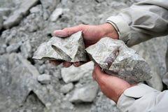 在白垩岩石采石场的箭石化石 库存图片