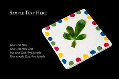 在白方块板材的绿色叶子在黑色 免版税图库摄影