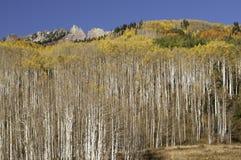在白杨木树上的红宝石峰顶由Kebler通行证 免版税库存照片
