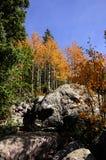 在白杨木的秋天 图库摄影