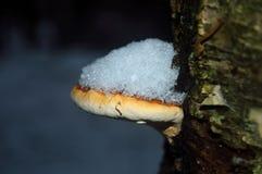 在白杨木的蘑菇 免版税库存图片