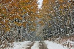 在白杨木胡同的第一雪 库存照片