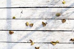 在白板的下落的叶子 库存照片