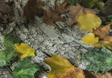 在白桦树皮的叶子 免版税库存图片