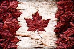 在白桦树皮的真正的叶子加拿大旗子 库存照片