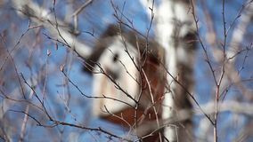 在白桦的鸟舍 影视素材