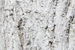 在白涂料的树皮 免版税库存照片