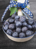 在白色上釉的碗的蓝莓有蓝色弓和丝带的 图库摄影