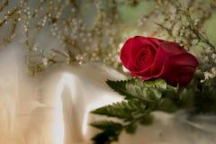 在白色丝绸布料浪漫婚礼华伦泰的真正的新鲜的红色玫瑰 免版税图库摄影