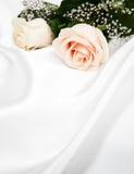 在白色丝绸背景的玫瑰 免版税库存照片