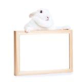 在白色举行的框架copyspace隔绝的白色兔子 免版税库存图片