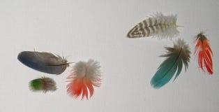 在白色亚麻制背景的绿松石红色青绿和布朗羽毛 免版税库存照片