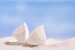 在白色佛罗里达海滩沙子的白色热带壳在太阳光下 免版税库存照片