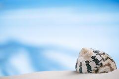 在白色佛罗里达海滩沙子的热带海壳在太阳锂下 图库摄影