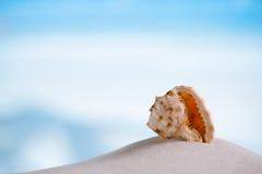 在白色佛罗里达海滩沙子的热带海壳在太阳锂下 免版税库存照片