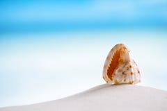 在白色佛罗里达海滩沙子的热带海壳在太阳锂下 库存照片