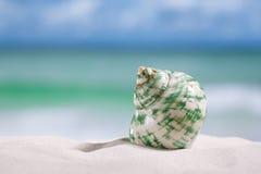 在白色佛罗里达海滩沙子的热带海壳 免版税库存图片