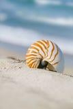 在白色佛罗里达海滩沙子的舡鱼壳在太阳光下 库存照片