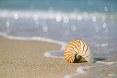 在白色佛罗里达海滩沙子的舡鱼壳在太阳光下 免版税库存照片