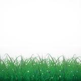 在白色光亮的背景的草与花 免版税库存照片