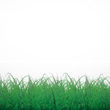 在白色光亮的背景的草 库存图片