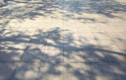 在白色具体blackground的树阴影 免版税库存照片