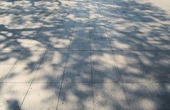 在白色具体blackground的树阴影 免版税库存图片