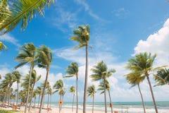在白色含沙热带海滩的可可椰子树 使布赖顿椅子日甲板英国节假日懒人海边有风夏天的星期日靠岸 图库摄影