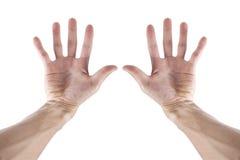 在白色和十个手指隔绝的两只手 免版税库存照片