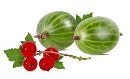 在白色和红浆果隔绝的鹅莓 库存图片