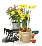 在白色和花隔绝的园艺工具 免版税库存图片