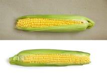 在白色和ocherous背景的玉米 免版税库存图片