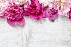 在白色土气木背景的惊人的桃红色牡丹 免版税库存照片