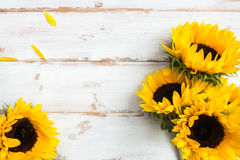 在白色土气背景的黄色向日葵花束 库存图片