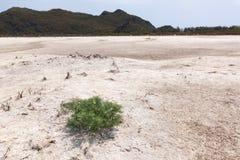 在白色地面的唯一树 免版税库存图片