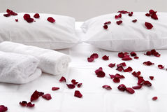在白色坐垫的浪漫美丽的红色瓣 免版税库存图片