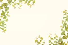 在白色墙壁上的一点叶子背景的 免版税库存照片