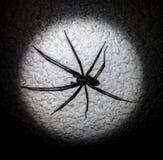 在白色墙壁上的蜘蛛 免版税库存照片