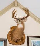 在白色墙壁登上的鹿头 库存照片