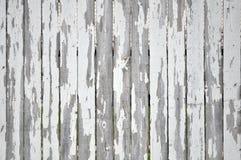 在白色尖桩篱栅的削皮油漆 免版税图库摄影