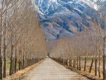 在白色山下的沿途有树的车道 库存照片