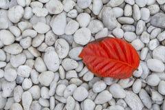 在白色岩石的红色叶子 免版税库存照片