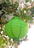 在白色开花的灌木的绿皮书灯笼 免版税库存图片