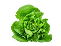 在白色或沙拉隔绝的绿色黄油莴苣菜 免版税图库摄影