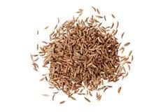 在白色或香芹籽隔绝的小茴香籽 免版税图库摄影
