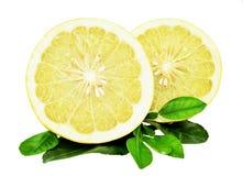 在白色或黄色葡萄柚隔绝的柚 图库摄影