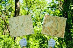 在白色手套的侍者` s手拿着两块木匾 免版税库存图片