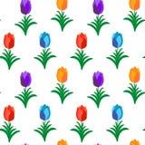 在白色无缝的样式的五颜六色的郁金香 免版税库存图片