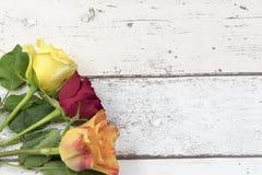 在白色木作用背景的三朵玫瑰与拷贝空间 免版税库存照片