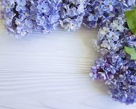 在白色木制框架背景的美丽的淡紫色花束边界植物学构成4月开花葡萄酒 库存照片
